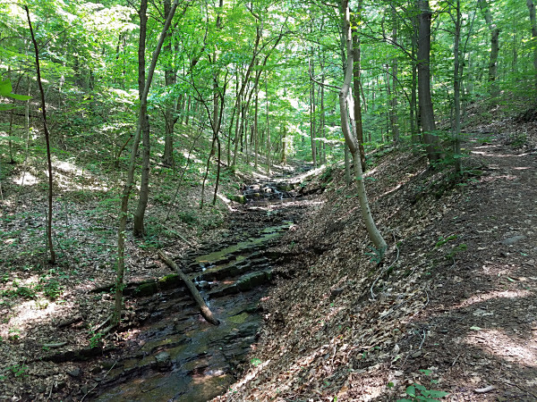 Neal Thorpe Trail. The beginning of the trail follows a small creek through a scenic ravine.